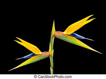 πουλί από επίγειος παράδεισος , λουλούδι , 50