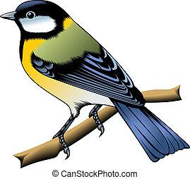 πουλί , γραφικός