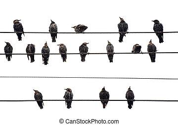 πουλί , επάνω , ένα , wire., απομονωμένος , επάνω , white.