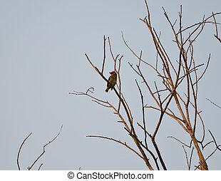 πουλί , επάνω , ο , branch.