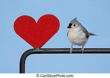 πουλί , με , ένα , καρδιά