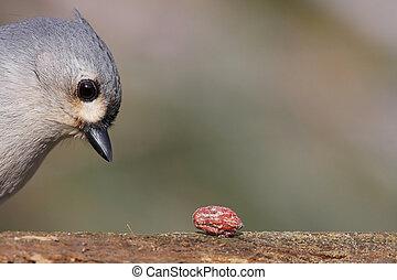 πουλί , με , ένα , φυστίκι