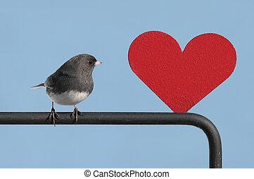 πουλί , με , ανώνυμο ερωτικό γράμμα , καρδιά