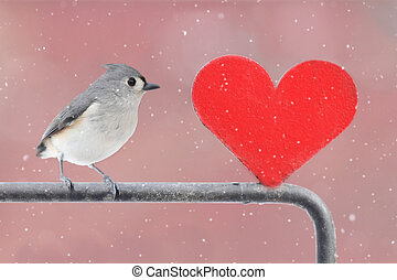 πουλί , με , καρδιά