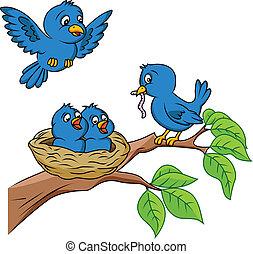 πουλί , οικογένεια