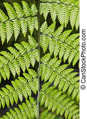 πράσινο , βρεγμένος , εργοστάσιο , φύλλα , πάνω , ένα , μαύρο φόντο