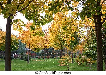 πράσινο , κίτρινο , πάρκο , δέντρα , foliage.
