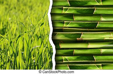 πράσινο , συλλογή , φόντο , φύση