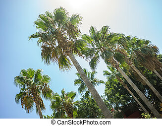 πράσινο , τροπικός , ινδική καρύδα αρπάζω με το χέρι , δέντρα , μέσα , ο , μπλε , ηλιόλουστος , ουρανόs