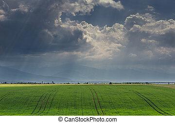 πράσινο , cornfield , ουρανόs , θυελλώδης