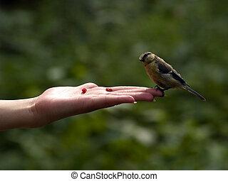πραγματικός , πουλί , μέσα , χέρι