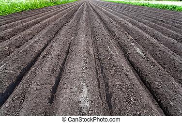 πρόσφατα , καλλιεργημένος , έδαφος