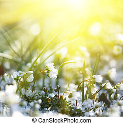πρώτα , λουλούδια