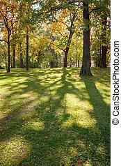 πόλη , λιακάδα , πάρκο , διαμέσου , δέντρα