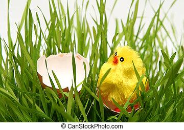 πόσχα , κοτόπουλο