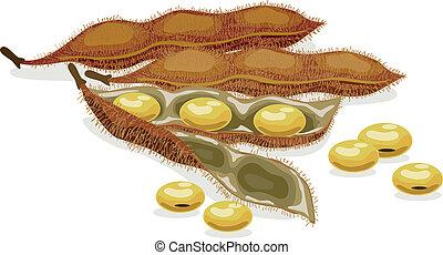 ρεαλιστικός , μικροβιοφορέας , soybean., illustration.