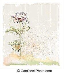 ροζ , κρασί , εικόνα , τριαντάφυλλο