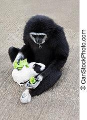 σίτιση , guineapig, μαϊμού