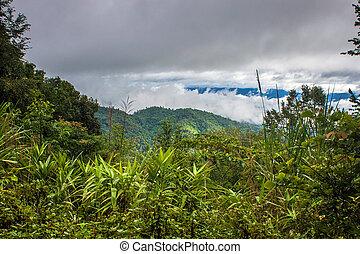 σιάμ , ζούγκλα , βόρεινος