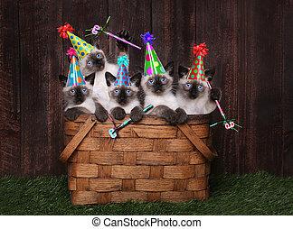 σιαμαίος, γιορτάζω, καπέλο, γενέθλια, γατάκι