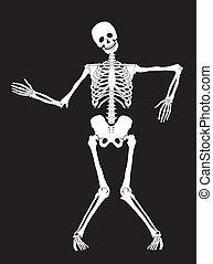 σκελετός