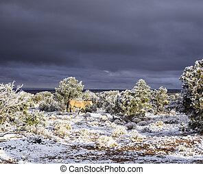 σκοτάδι , άλογο , arizona , ουρανόs , χιόνι