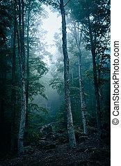 σκοτάδι , δάσοs , με , ομίχλη