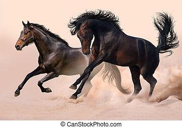 σκόνη , άλογο , δυο