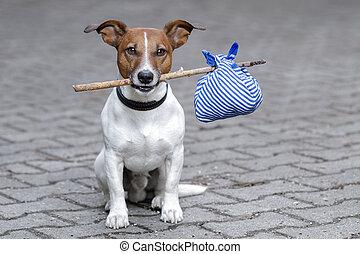 σκύλοs , άστεγος