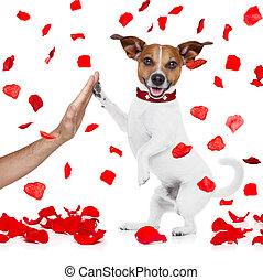 σκύλοs , βαλεντίνη , ψηλά , αγάπη , πέλμα ζώου , πέντε