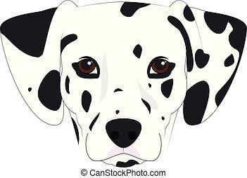 σκύλοs , εικόνα , απομονωμένος , μικροβιοφορέας , φόντο , άσπρο , δαλματικός σκύλος