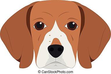 σκύλοs , εικόνα , απομονωμένος , ράτσα αγγλικού λαγωνικού , μικροβιοφορέας , φόντο , άσπρο