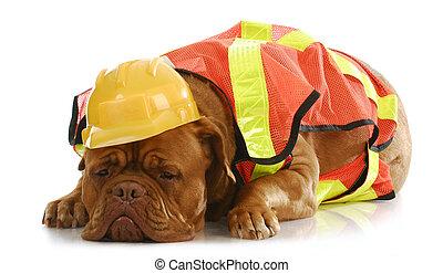 σκύλοs , εργαζόμενος