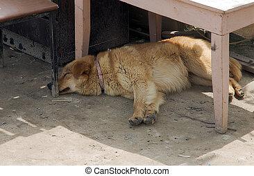 σκύλοs , κοιμάται , επάνω , δομή , περιοχή