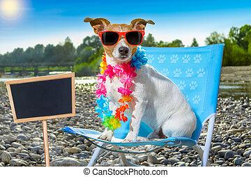 σκύλοs , μέσα , αιώρα , επάνω , καλοκαίρι