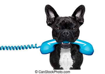 σκύλοs , τηλέφωνο , τηλέφωνο
