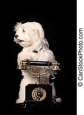 σκύλοs , τηλέφωνο