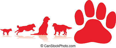 σκύλοs , φόντο , πέλμα ζώου
