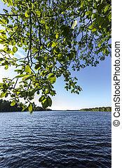 σουηδικά , φύλλα , λίμνη
