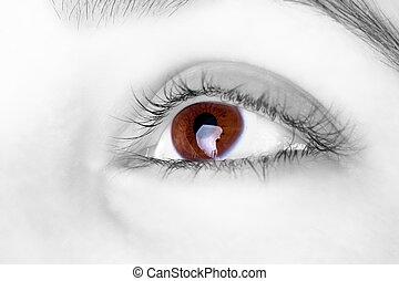σπουδαίος , μάτι , μεγάλος , καφέ