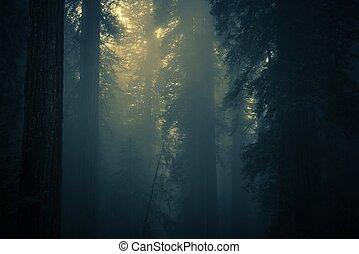 σπούκι , ομίχλη , άκρος αναδασώνω