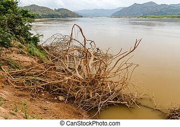 στεγνός , νερό , mekong , δέντρο , ακτή , ποτάμι , laos , ρίζα