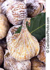 σύκα , αόρ. του dry , φύλλο , κόλπος