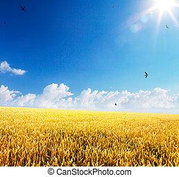τέχνη , βάφω κίτρινο αγρός , ωρίμαση , σιτάρι , backdrop , αυτιά