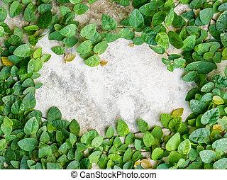 τοίχοs , φύλλα , πράσινο , κορνίζα , φόντο