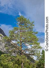 τοπίο , με , βουνά , και , δέντρα , μέσα , νορβηγία