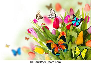 τουλίπα , πεταλούδες