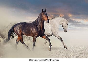 τρέξιμο , άλογο , σύνολο , εγκαταλείπω