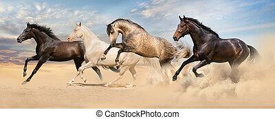 τρέξιμο , άλογο , σύνολο , καλπάζω