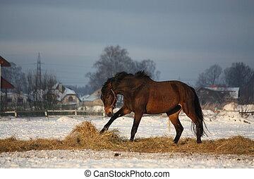 τρέξιμο , καβουρντίζω άλογο , χειμώναs , ελεύθερος